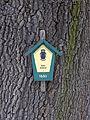 Traubeneiche (Quercus petraea), Olbernhau (4).jpg