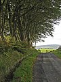 Tree-lined road in the Stinchar valley - geograph.org.uk - 262943.jpg