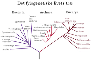 Tree-of-life (Danish version)