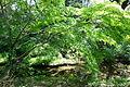 Tree - Institute for Nature Study, Tokyo - DSC02149.JPG
