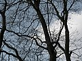 Trees and Sky in Whitworth Park.jpg