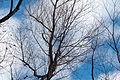 Trees fall colors 2779.jpg