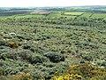 Trengwainton Carn - geograph.org.uk - 33672.jpg