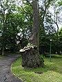 Trzęsacz park, XVIII nr 658124 (10).JPG