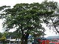 Tuy,Batangasjf2814 44.JPG