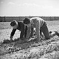 Twee mannen op het veld in het Joodse werkdorp in de Wieringermeer, Bestanddeelnr 254-4926.jpg