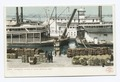 Unloading Cotton at Levee, Memphis, Tenn (NYPL b12647398-68766).tiff