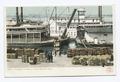 Unloading Cotton at Levee, Memphis, Tenn (NYPL b12647398-68766).tiff