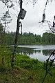 Valday-Petit lac dans le parc national (3).jpg