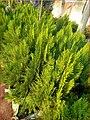 Vegetation in Kaduna2.jpg