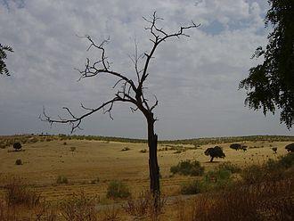 Francisco Elías de Tejada y Spínola - summer in rural Extremadura