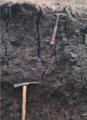 Vertissolo Ebânico (SIBCS, 2018).png