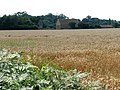 View across field towards Holly Farm - geograph.org.uk - 522220.jpg