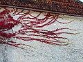 Vigne vierge (Parthenocissus tricuspidata) (1).JPG