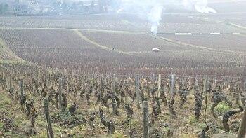 Vignoble de Givry 1.JPG