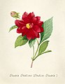 Vintage Flower illustration by Pierre-Joseph Redouté, digitally enhanced by rawpixel 10.jpg
