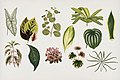Vintage illustrations by Benjamin Fawcett for Shirley Hibberd digitally enhanced by rawpixel 18.jpg