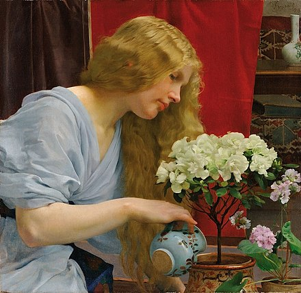 Zimmerpflanze - Wikiwand Oleander Als Zimmerpflanze Richtig Pflegen