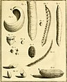 Voyage en Californie pour l'observation du passage de Vénus sur le disque du soleil, le 3 juin 1769; contenant les observations de ce phénomene, and la description historique de la route de l'auteur à (14772764162).jpg