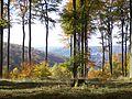 Wald bei Blieskastel-Lautzkirchen im Herbst.JPG