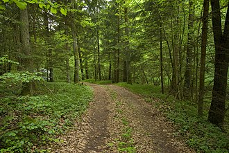 Forest road - Forest track in the Bavarian Forest