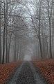 Walking path bordered with fallen leaves in Parc naturel de l'Ardenne méridionale (DSCF6388).jpg