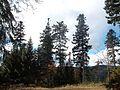 Wanderung im November - panoramio (48).jpg
