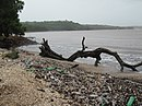Waste cocobeach india.jpg