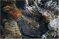 Water stream 02.JPG