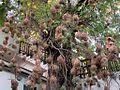 Weaver Bird Nests (33357837033).jpg