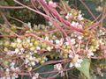 Weiden-Seide Blüten.jpg
