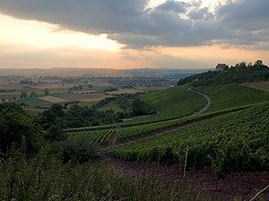 Vineyard Ipsheim
