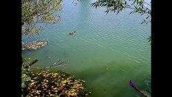 Fil:   Welke Blätter.webm