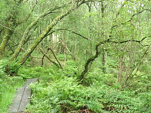Wet woodland - A Wet Woodland in Firebeacon, Devon