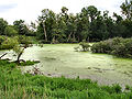 Wetland-marshall-county-indiana.jpg