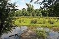Wetlands, New Echota, July 2017 1.jpg