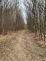 Wiener Wald 18 50 52 445000.jpeg