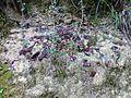 WikiProjekt Landstreicher Geotop Scheidegger Wasserfälle 31.jpg