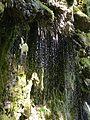 WikiProjekt Landstreicher Wasserfall Hinang 44.jpg