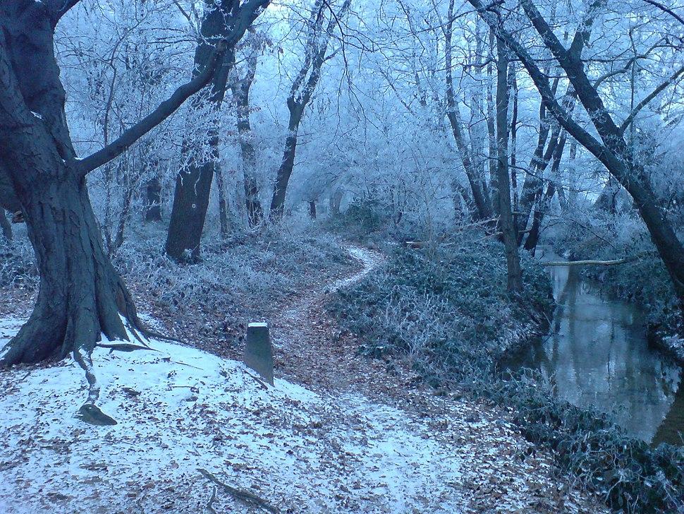 Winter Forest Near Erzhausen II