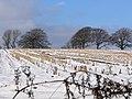 Winter Walk - Jebb Lane - geograph.org.uk - 1153059.jpg