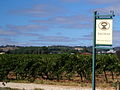Wolf Blass vineyard in Barossa Valley. SA.jpg
