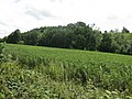 Wooded Hillside Near Great Witley - geograph.org.uk - 1400488.jpg