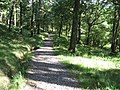 Woodland Trust path near Glen Finglas car park - geograph.org.uk - 544318.jpg