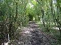 Woodland bridleway - geograph.org.uk - 438571.jpg