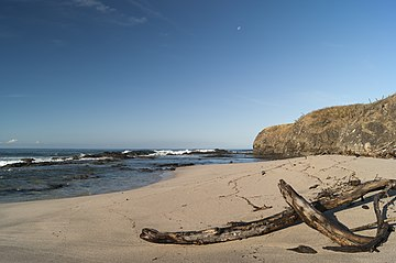 Woods at the beach Junquillal 01.jpg
