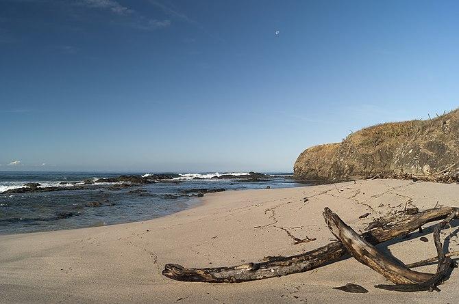 English: Woods at Junquillal Beach, Guanacaste...