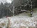 Wythop Woods - geograph.org.uk - 370424.jpg