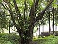 Yatsuomachi Odamou, Toyama, Toyama Prefecture 939-2455, Japan - panoramio (2).jpg