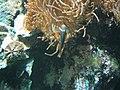 Zoo2007 img 5885.jpg